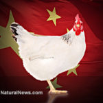 USDA to allow U.S. to be overrun with contaminated chicken from China